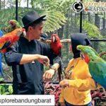 Wisata Grafika Bird Park, Cikole, Lembang, Bandung Barat