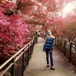 Forest Walk Babakan Siliwangi